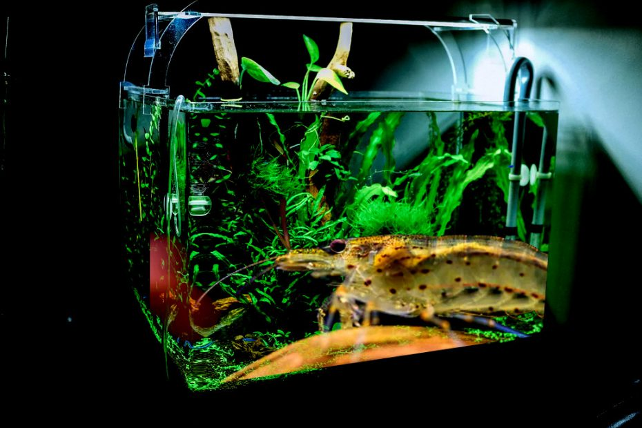 Best Tank for Shrimp